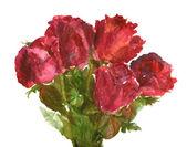 Mooie rozen — Stockfoto