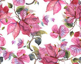 Bougainvillea Pattern — Stock Photo