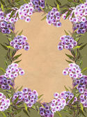 Phlox Frame — Stock Photo