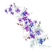 Flores de verão azul — Foto Stock