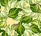 Host green leaves seamless pattern — Stock Photo