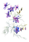 Blauwe zomerbloemen — Stockfoto