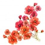Poppies flowers — Stock Photo #51642215