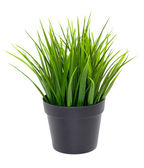 Green grass in black flower pot — Stock Photo