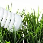 Energy saving light bulb in green grass — Stock Photo