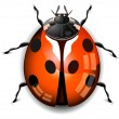 Stock Vector: Ladybird