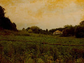 Landscape with field and tree — Photo