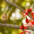 Stock Photo: Bird on branch