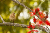 Bird on a branch — Stock Photo