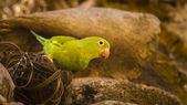 Colorful parrot — Stock Photo