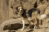 Brown and white dog — Stock Photo