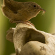Stock Photo: Small brown bird