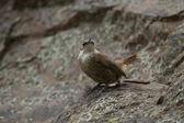 Small brown bird — Stock Photo