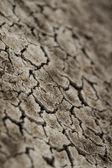 Lehm-boden geknackt — Stockfoto