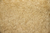 Fur texture — Photo