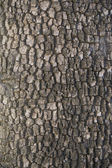 Tree cortex texture — Stock Photo
