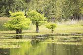 Ağaçlar su — Stok fotoğraf