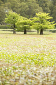 Green trees — Foto Stock