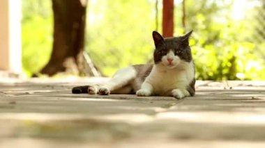 Cat resting outside — Stock Video