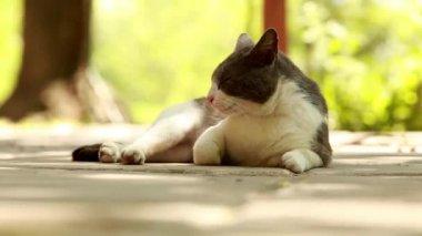 Cat resting outside — Vídeo de Stock