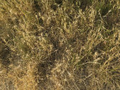 Natural grass texture — Stock Photo