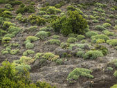 Natural shrubs of arid regions — Stock Photo