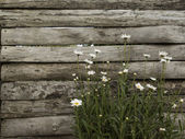 Wood fence — Stock fotografie