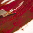 Oil colors mix with spatula — Stock Photo #39387987
