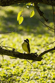 Bird on a branch outside — Stok fotoğraf
