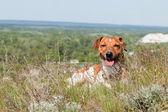 Dog puppy. — Foto de Stock