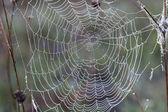 Spider web. — Stock Photo