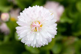 Flower. — Стоковое фото
