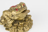 Monetary frog — Stockfoto