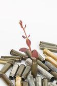 árvore e balas. — Fotografia Stock