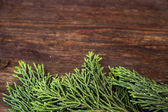 Juniper branches on wood background — Stock Photo
