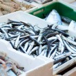 Fishmarket - alici — Stock Photo