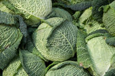 Savoy cabbage - Verza — Stock Photo
