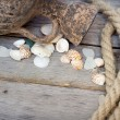 Marine background - seashells, rope and amphora — Stock Photo