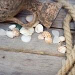 Marine background - seashells, rope and amphora — Stock Photo