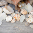 Marine background - seashells, rope and amphora — Stock Photo #42874197