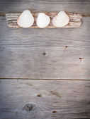 Travel  background - wood  and seashells — Stok fotoğraf