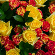 Close-up of colorful assorted roses — Stock Photo