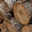 Close-up wooden cut texture — Stock Photo #43439371