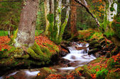 Autumn landscape, mountain river and trees — Stock Photo