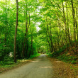 Forest trees with road leading to horizon. — Stock Photo #39016269