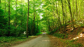 Forest trees with road leading to horizon. — 图库照片