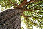 Foto vertical de un viejo árbol. — Foto de Stock