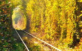 """Natural tunnel of """"love"""" — Stock Photo"""