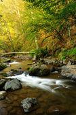 Mountain river in Autumn — Stock Photo