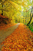 Country road covered with leaves in early Autumn. — Stock Photo